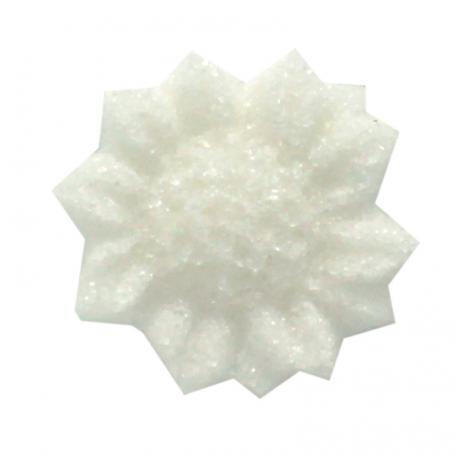 tournesol blanc